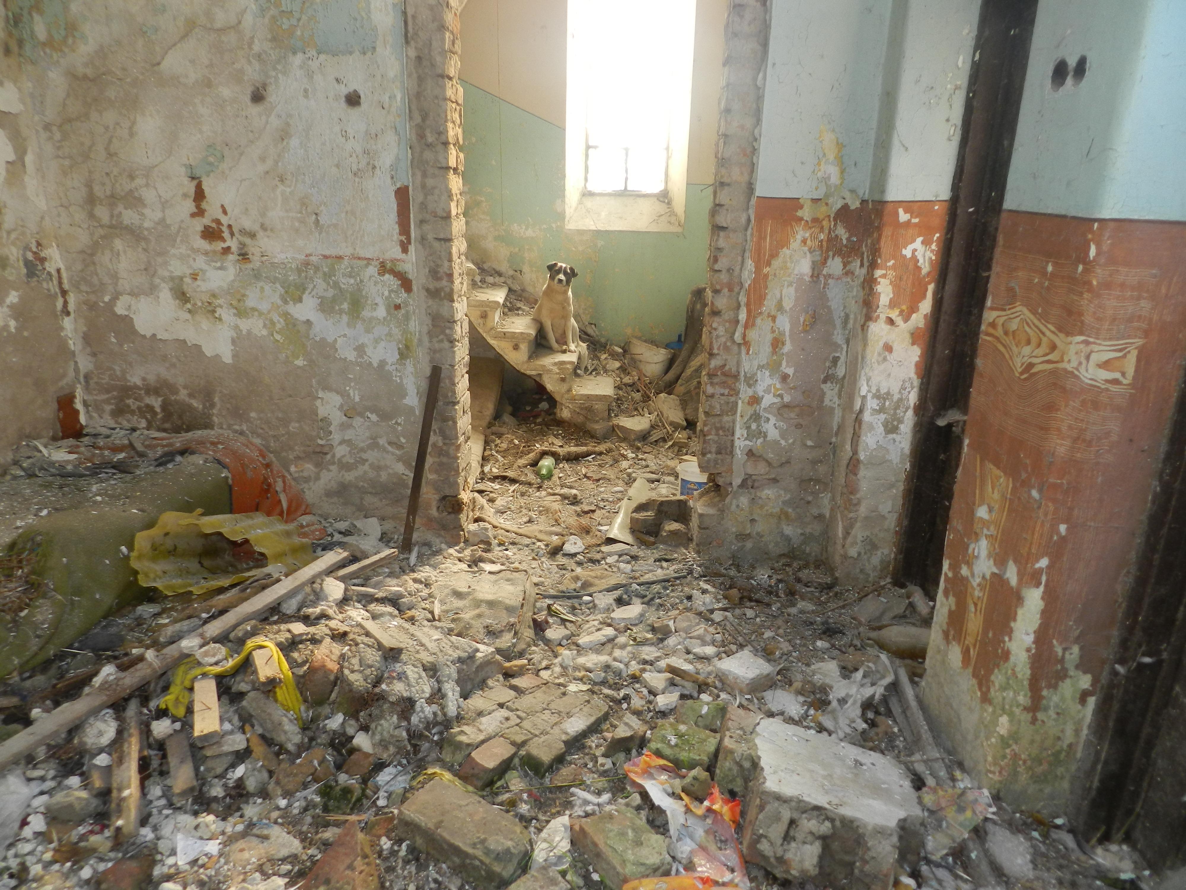 Constanta: Sinagoga askenază, în ruine de 20 de ani, ar putea fi consolidată si restaurată de Compania Națională de Investiții 2