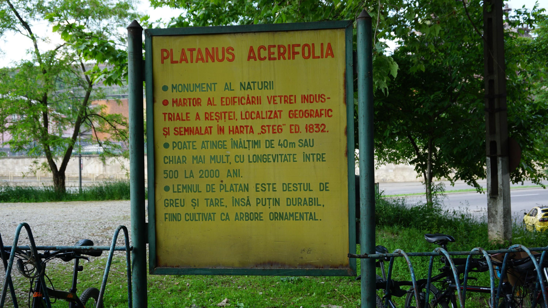 Reșița: Mai mulți arbori clasați ca monumente ale naturii, printre care arbori de lalea și un Ginkgo biloba, au fost tăiați sau mutilați 10